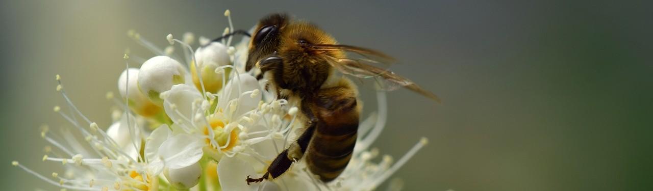 Союз пчеловодов